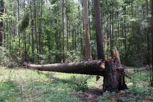 TreeFallsInTheWoods